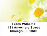 Dreamy Daisies Address Labels