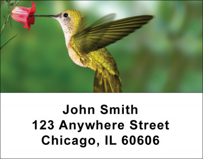 Hummingbirds Address Labels | LBANI-25