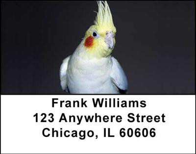 Cockatiels Address Labels | LBANI-39