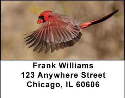 Cardinals Address Labels | LBANI-40