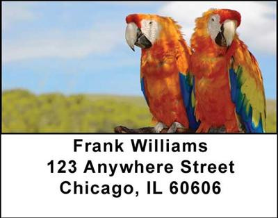 Macaw Parrots Address Labels | LBANI-41