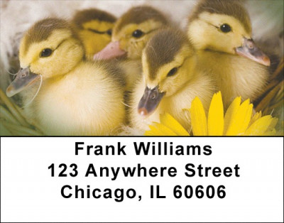 Ducklings in Spring Address Labels | LBZANI-63