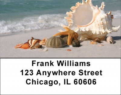 Sand and Shells Address Labels | LBZSCE-24