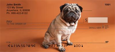 Pug Puppies Checks