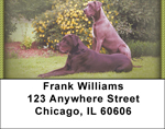 Great Danes Address Labels