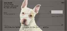 Pitt Bulldogs Personal Checks