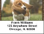 Basset Hound Puppy Address Labels