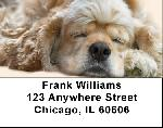 Sleeping Cocker Spaniel Address Labels