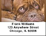 French Mastiff Address Labels