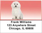 Adorable Bichons Address Labels