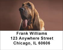 Bloodhound Portrait Address Labels