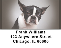 For Boston Terrier Lovers Address Labels