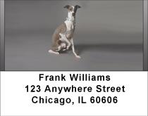 Greyhounds Address Labels