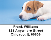 Jack Russell Puppy Love Address Labels