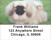 Perky Pekingese Address Labels