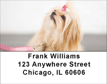 Pekingese Princess Address Labels